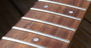 Guitar News – Nuove leggi su palissandro e bubinga